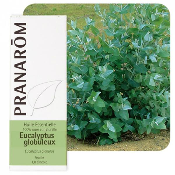 Eucalyptus globulus - Eterično ulje