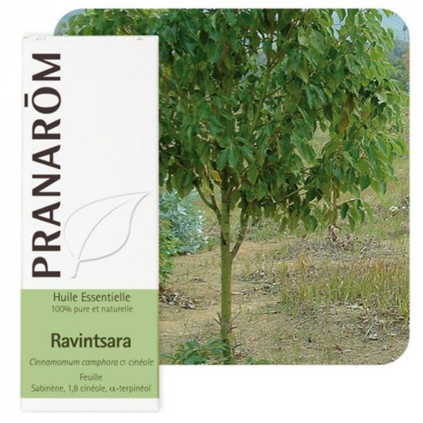 Ravensara - Eterično ulje
